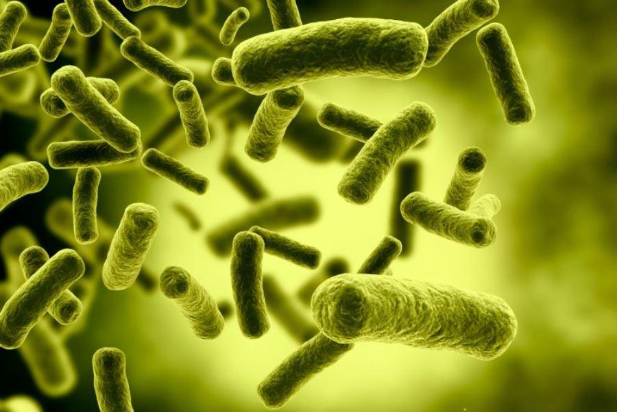 caçadores de micróbios