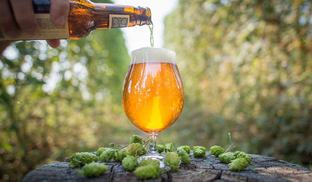 Cerveja_IPA-baba-sempre-fresca